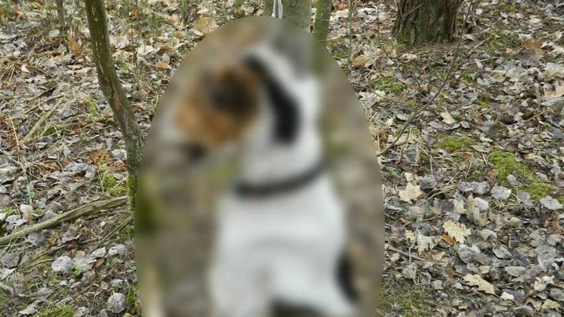 Sadysta powiesił psa na sznurku w lesie. ''Widok był przerażający'' [DRASTYCZNE ZDJĘCIE]