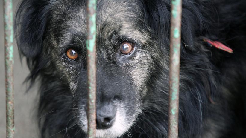 Tragedia w schronisku dla zwierząt. Wybuchł pożar, nie żyją psy