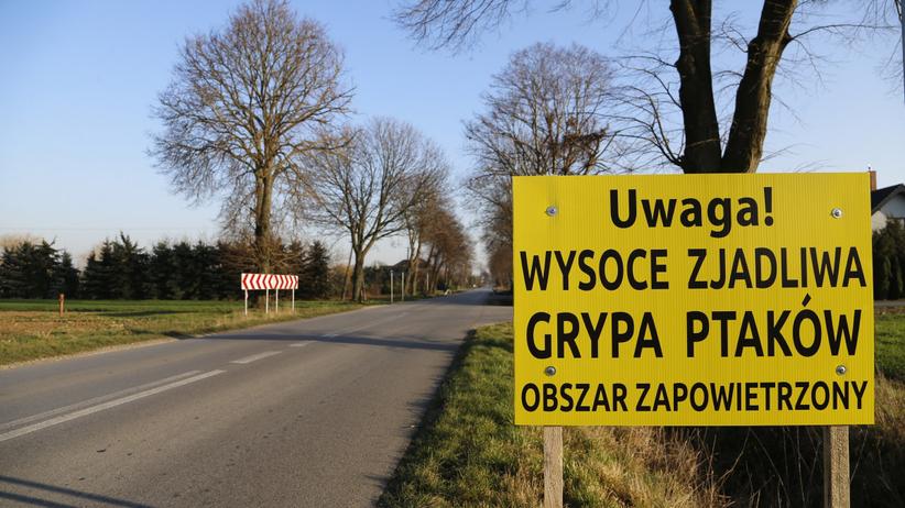 Ptasia grypa rozprzestrzenia się w Polsce. Wykryto kolejne ognisko wirusa