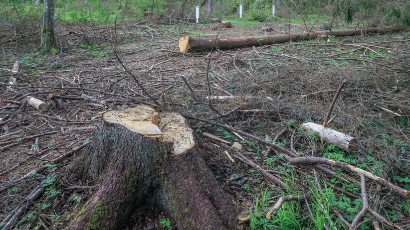 Wycinka drzewa, wypadek