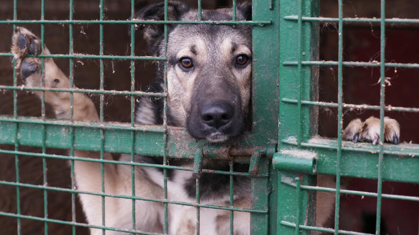 Schronisko w Krakowie apeluje o pomoc. Padł rekord liczby porzuconych psów i kotów