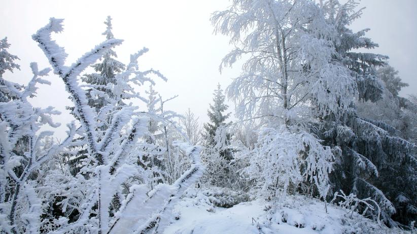 śnieg spadł w Polsce