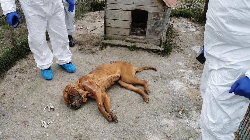 Stara Huta. Zwłoki 250 psów na posesji