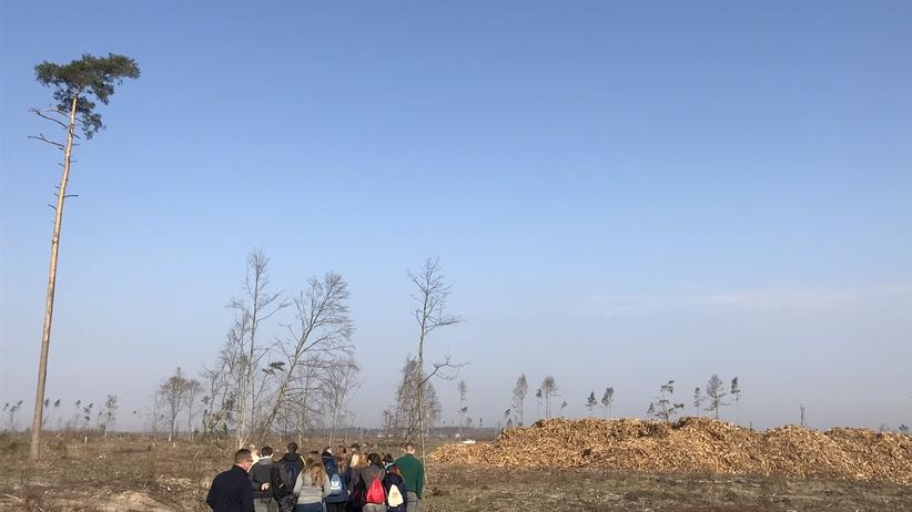 Strajk nauczycieli trwa, a uczniowie z gminy Rytel...sadzą drzewa