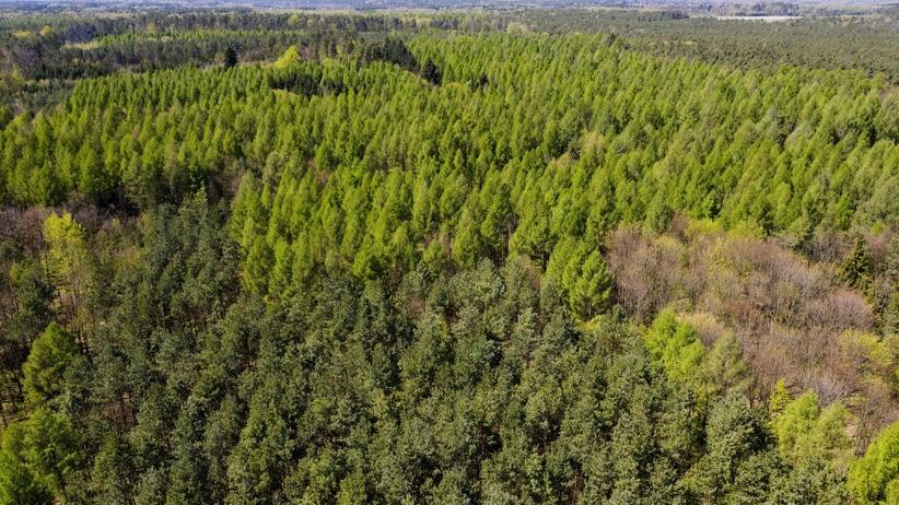 przywrócono zakaz wstępu do lasu