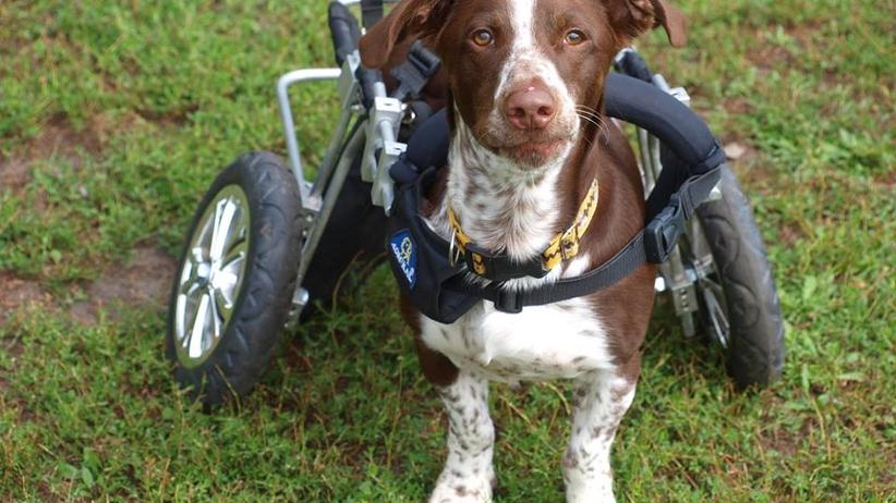 Miał powybijane zęby, złamaną szczękę i uraz kręgosłupa. Oprawca psa Fijo usłyszał wyrok