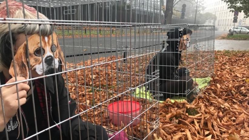 Demonstracja przeciw testom na zwierzętach. Aktywiści protestują przed ambasadą