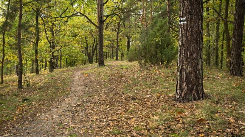 Warszawa. Napastował kobietę w Lesie Kabackim. Szuka go policja