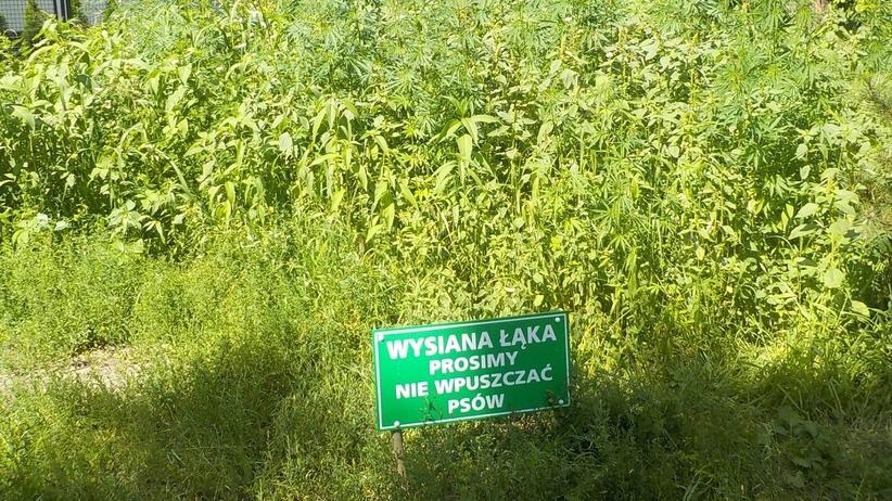 Konopie Warszawa