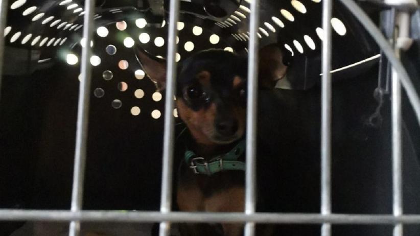 Pies uwięziony w nagrzanym samochodzie
