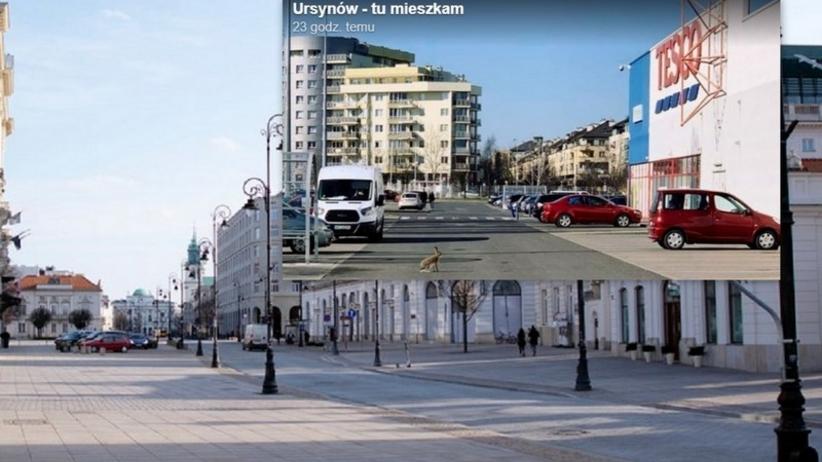 Ulice Warszawy, epidemia koronawirusa