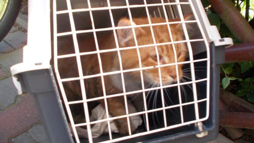 Kot był uwięziony przez dwa dni.