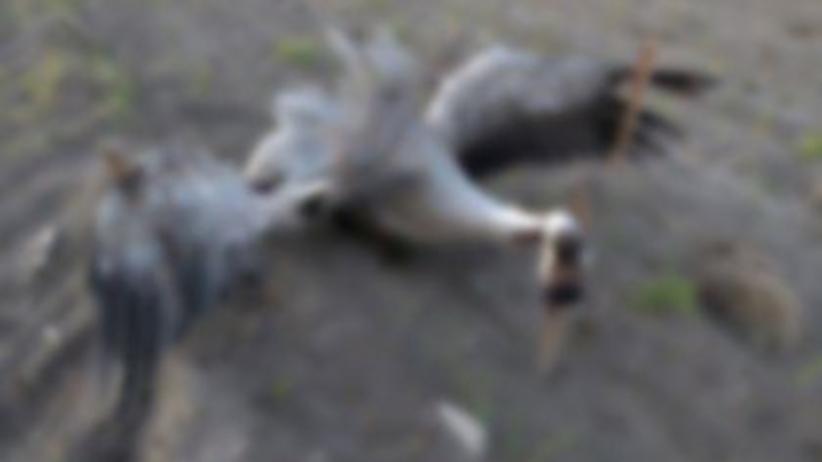Zwierzęta przemoc Mazowsze