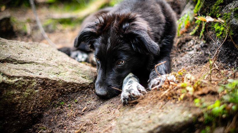 Makabryczny finał poszukiwań psa. Znaleziono jego oskalpowane zwłoki