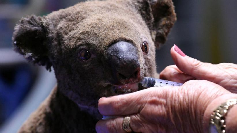 Śpiworki dla koali i kangurów