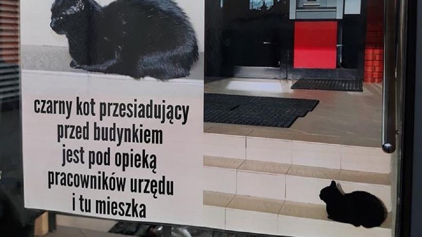 Kot w Urzędzie w Piasecznie