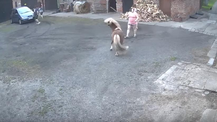 Kobieta z dziećmi biją i kopią kucyka. Właściciel Gucia opublikował nagranie