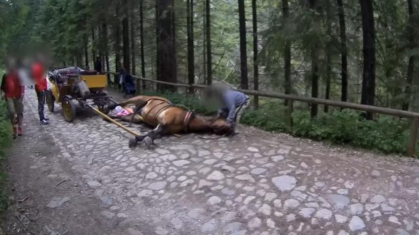 Wypadek konia w Tatrach