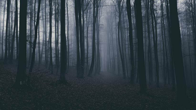 Zwłoki noworodka zakopane w lesie pod Zgierzem. Matka z zarzutem zabójstwa