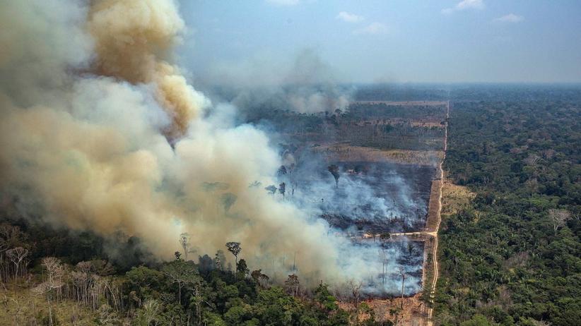 Amazonia pożar 2019. Papież Franciszek modlił się o ugaszenie pożarów