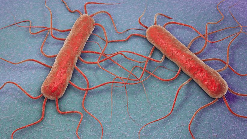 Epidemia listeriozy w Hiszpanii. Wydano międzynarodowy alert