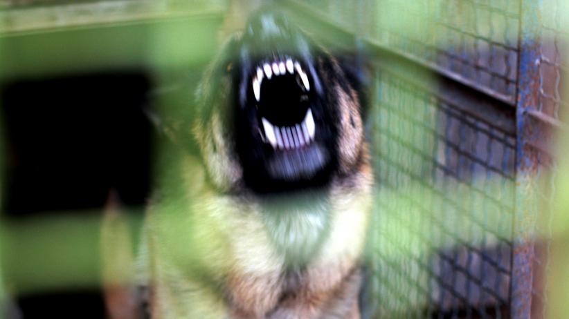 Francja. Psy zaatakowały kobietę w 6. miesiącu ciąży. 29-latka nie żyje