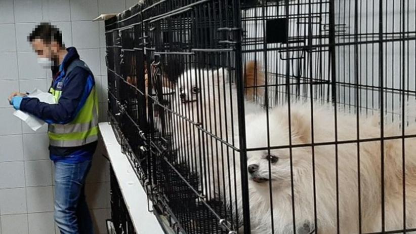 270 psom obcięto struny głosowe