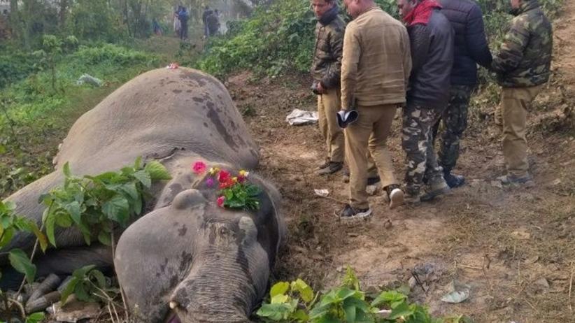 Indie Słonie
