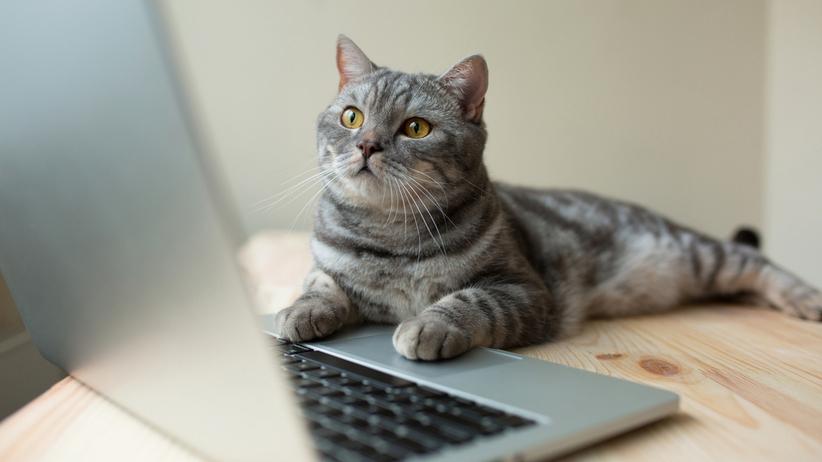 kot kandydatem w wyborach
