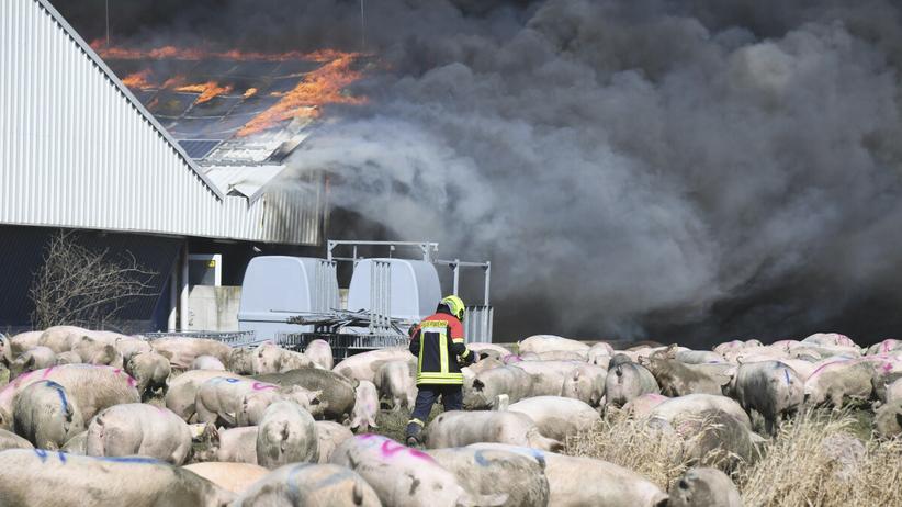 Niemcy. W pożarze fermy zginęło 55 tys. świń