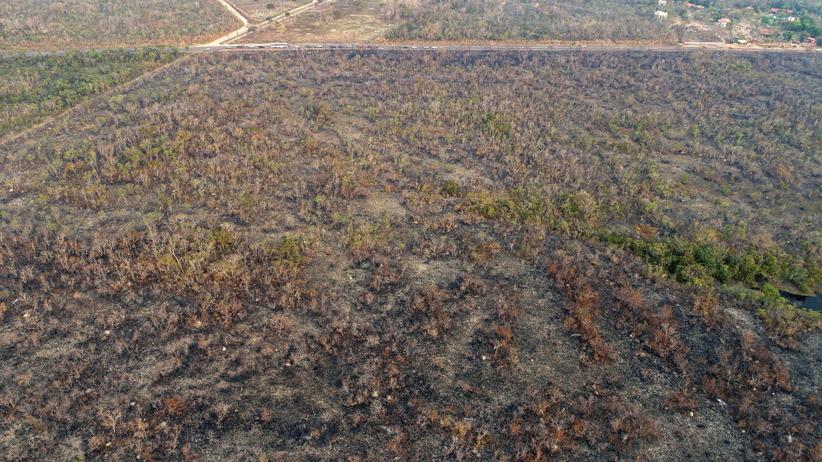 Płoną płuca świata. Katastrofa ekologiczna coraz bliżej