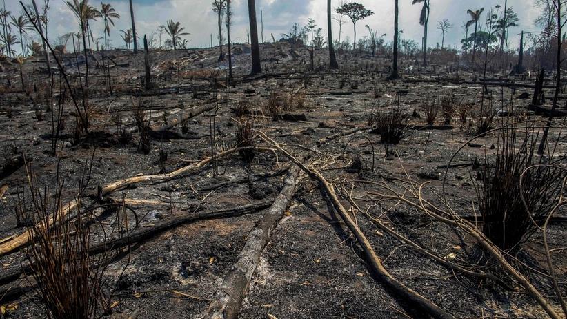 Amazonia w ogniu. Bolsonaro odrzuca pomoc