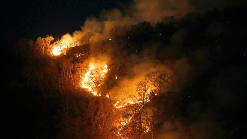 Pożar Amazonii.  Brazylia nie ma środków, aby walczyć z pożarem