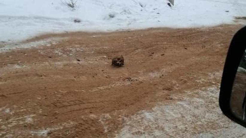 Ludzkie kości zmieszane z piaskiem na drodze/Rosja