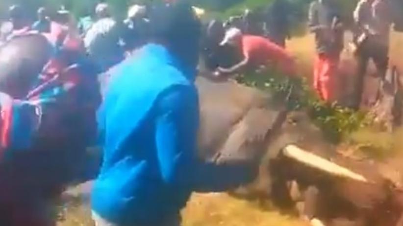 Słoń zakatowany maczetami
