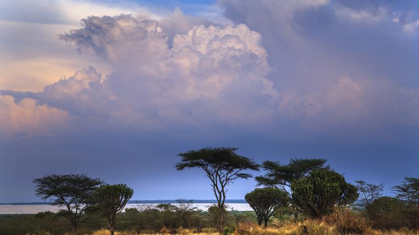 Turystka z USA porwana w parku narodowym w Ugandzie. Kidnaperzy żądają 500 tys. dolarów