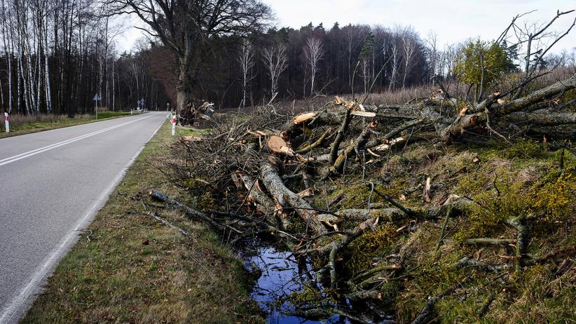 Śmiertelny bilans wichury. Powalone drzewo zabiło kobietę
