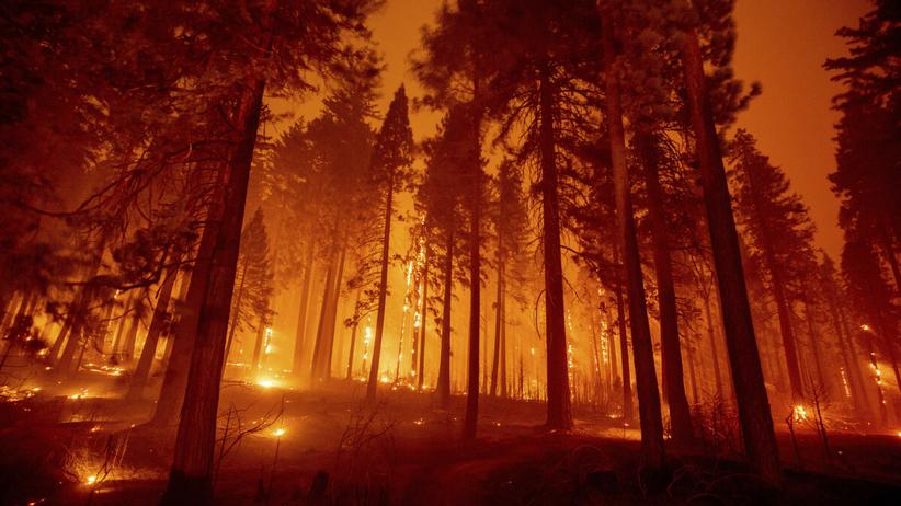 Pożary w Kalifornii. Ewakuowano tysiące ludzi