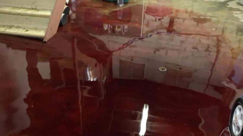 Krew w piwnicy
